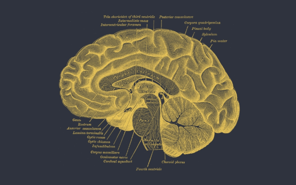 Therapy for Change artistic picture of the human brain gold on black